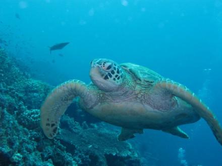 Kota-Kinabalu-Discover-Scuba-Diving-5-1024x768