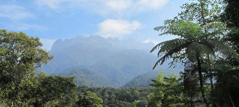 Choice of Mount Kinabalu Climb Packages