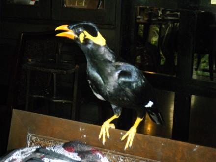 Tabin Wildlife Birding-2