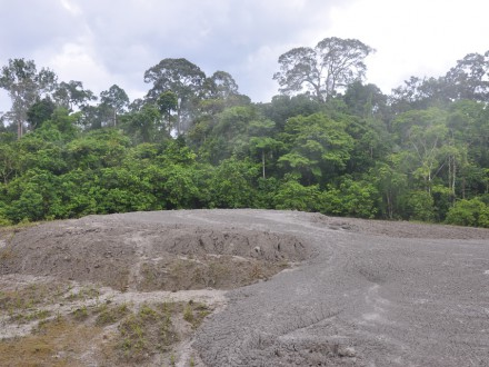 Tabin Wildlife Mud Volcano-9