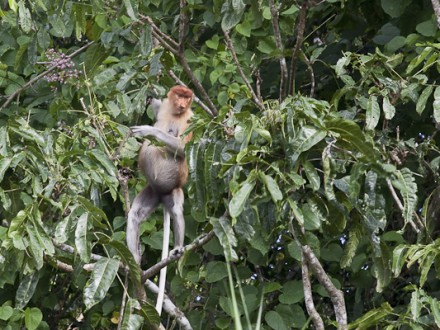 Tabin Wildlife Observation-10