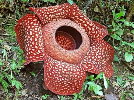 raffle-asia-flower